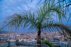 Palm trees overlooking the city of Fes, Morocco.