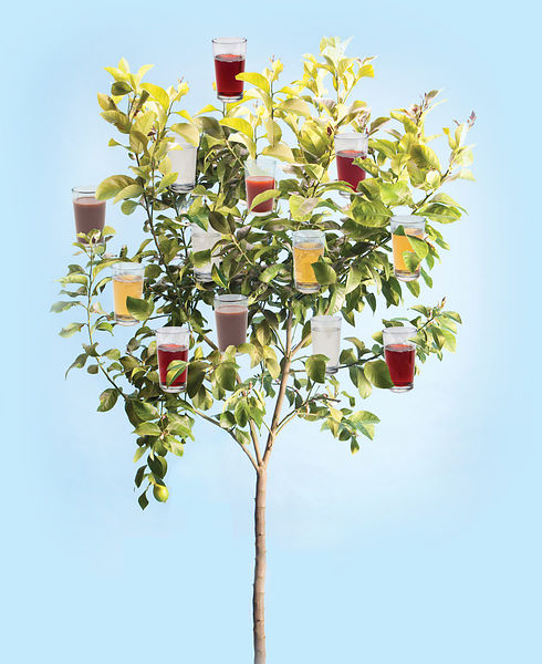 tree with drinks