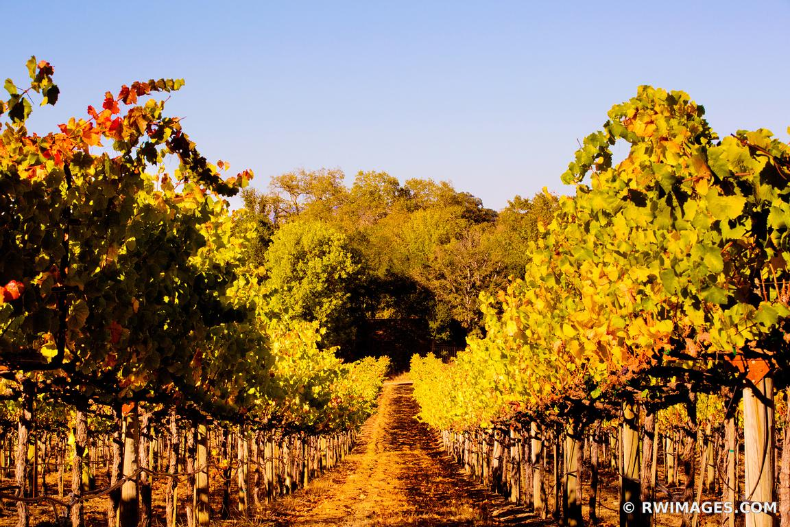 VINEYARD NAPA VALLEY CALIFORNIA COLOR
