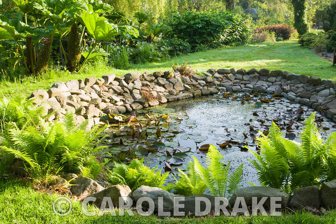 Pond edged with cobbles and ferns. Westonbury Mill Water Garden, Pembridge, Herefordshire, UK