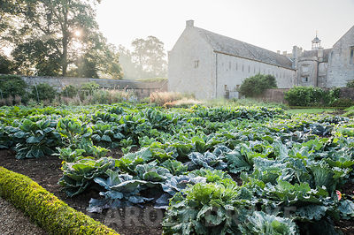 Ordered rows of cabbages in box edged beds in the kitchen garden. Forde Abbey, nr Chard, Dorset, UK