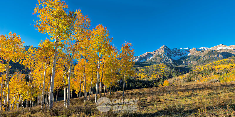 Aspen Grove and Peak S9 in the Sneffels Range - Large Print Option