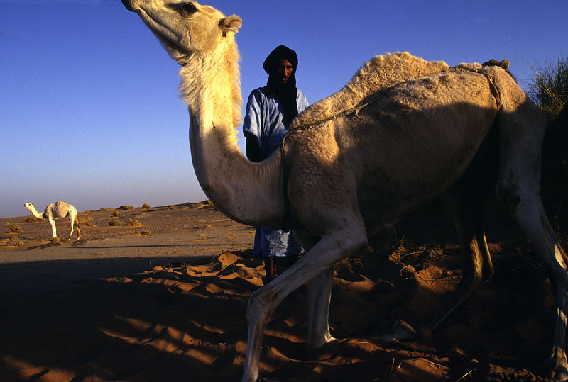 Mauritania - Chinguetti - A nomad goes to tend his camels