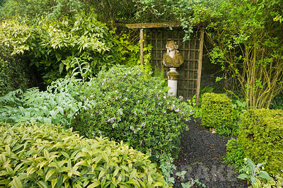 Classical bust in the Best garden with daphne, clipped box, Solomon's Seal, Sarcococca hookeriana var. digyna and golden hop,...