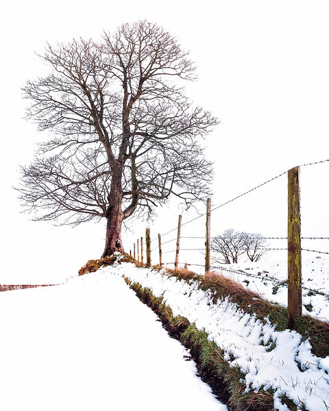 Tree - Fence - Snow