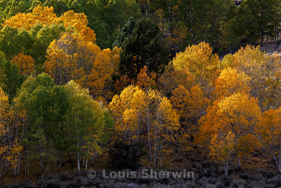 Eastern Sierra Fall Color photos