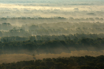 Aerial view over the Letea forest at dawn, Danube delta rewilding area, Romania, June 2012