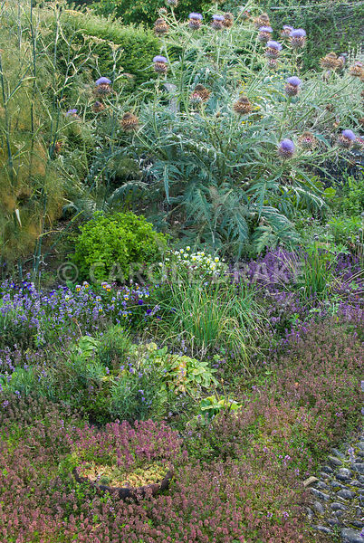 Sunken herb garden contains many medicinal and culinary plants including thymes, violas, lavender, fennel and glove artichoke...