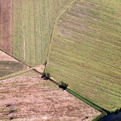 Crop Fields, Rome