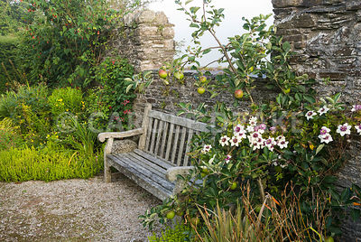 Seat below gap in wall is framed with a small apple tree supporting Clematis florida var sieboldiana with Clematis 'Gravetye ...