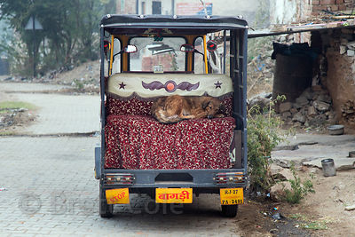 Street dog sleeping in an auto rickshaw, Longia Mohalla, Ajmer, Rajasthan, India