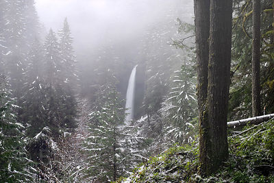 A fairy tale scene in the winter at Silver Falls State Park in Oregon. A distant South Falls (93 feet tall) sits in a snowy f...