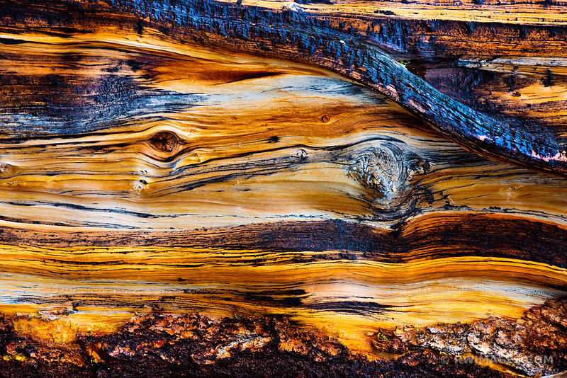 NATURE ABSTRACT CHARRED BRISTLECONE PINE MOUNT GOLIATH COLORADO COLOR HORIZONTAL