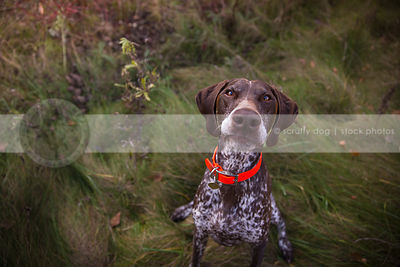 goofy brown speckled dog with expression staring up from grasses