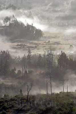 Morning fog in the Willamette Valley, Oregon.