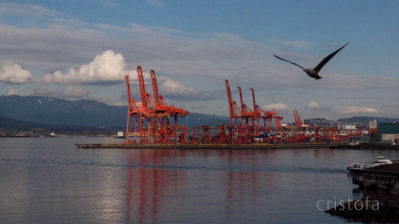 cranes in the Vancouver City container port