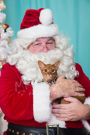 Portrait of Santa Claus Holding Orange Abyssinian Cat