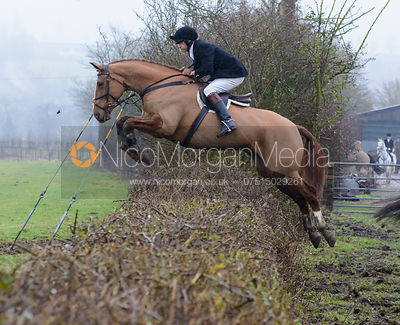 jumping a hedge at Town Park Farm