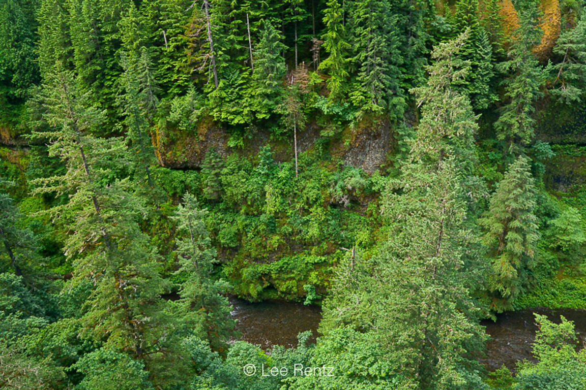 Eagle Creek Gorge Viewed from Eagle Creek Trail