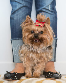 Yorkshire Terrier Standing Between Womans Feet