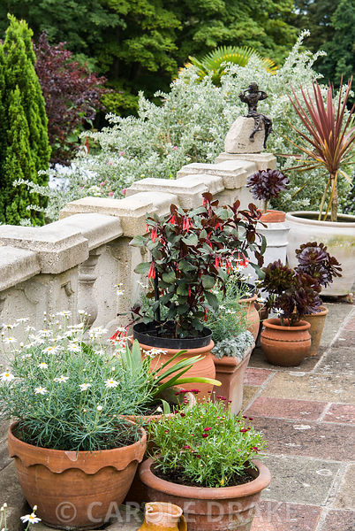 Terracotta pots on the terrace are planted with succulents including Aeonium arboreum, white flowered Argyranthemum foenicula...