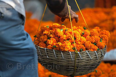Orange marigold flowers at the Howrah Flower Market, commonly referred to as the largest flower market in Asia. Near Howrah B...