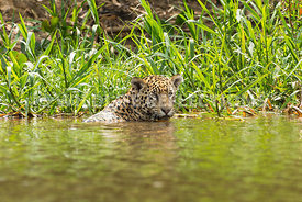 jaguar_reed_bath-1