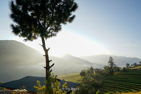 Morning view of terraced rice fields in Punakha, Bhutan.