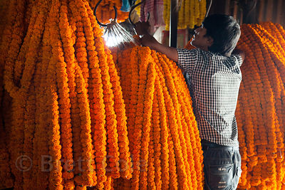 Marigold garlands for sale at the Howrah Flower Market, Kolkata, India. They will be used at weddings, in religious ceremonie...