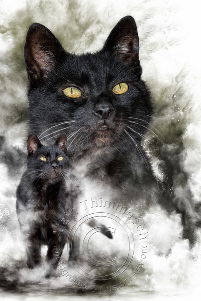 Art-Digital-Alain-Thimmesch-Chat-43