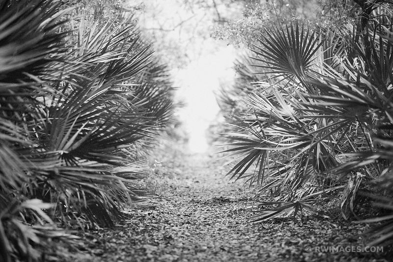 WILLOW POND TRAIL CUMBERLAND ISLAND GEORGIA BLACK AND WHITE