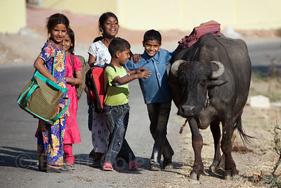 Children walk on a country road alongside a large water buffalo in the rural village of Kharekhari, Rajasthan, India