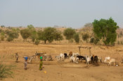 Peul girls collecting water from a well in Northern Senegal