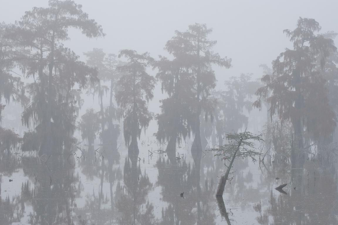 Heavy Fog at lake Martin