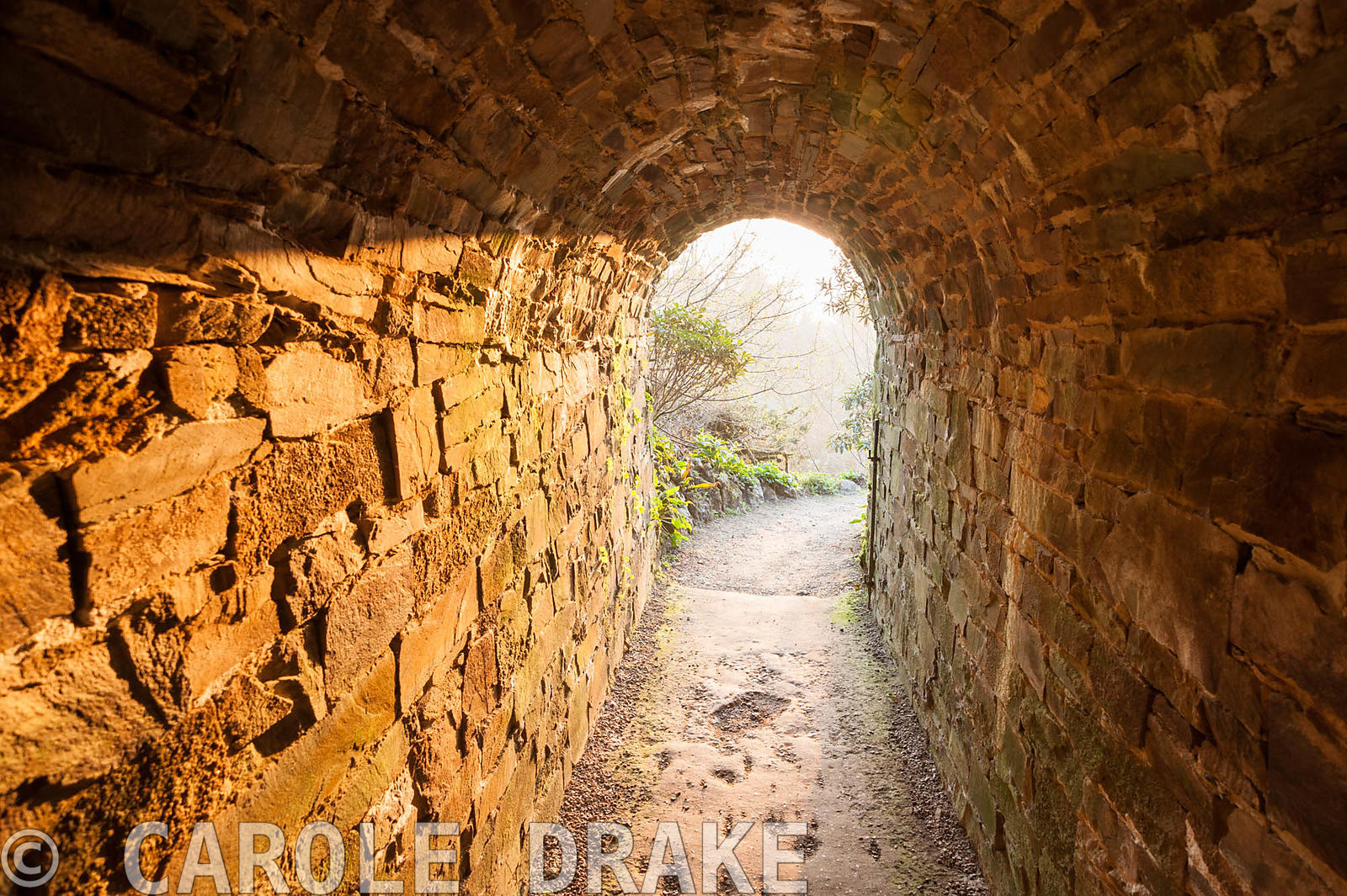 Tunnel leading to the valley garden illuminated by rays of dawn sunlight. Cotehele, Cornwall, UK