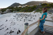 Tourist watching the African penguin colony, Boulders Beach, Cape Peninsula, South Africa