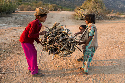 A boy and his sisters gather bundles of sticks in the desert, Hathi Kera, Rajasthan, India