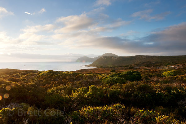 Early morning light in fynbos, Bordjesrif, Cape Peninsula, South Africa