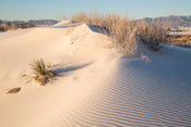 Morning Light on a Frosted Sand Dune.