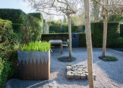 Gravelled courtyard area with four weeping ash, Fraxinus excelsior 'Pendula', steel and lead container, an arrangement of sto...