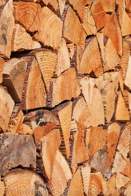 A log pile wall in the 'Food for Thought' garden at the RHS Hampton Court Flower Show. © Rob Whitworth