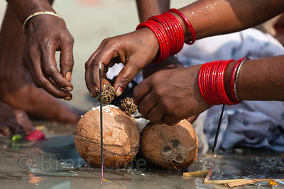 Pilgrims perform puja (prayer) with coconuts on the beach at the Gangasagar Mela, Sagar Island, India. Gangasagar is a Hindu ...