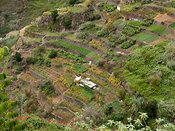 very intense cultivation on a steep slope