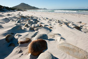 Rugged Coastline, Cape of Good Hope Nature Reserve, Cape Peninsula, South Africa