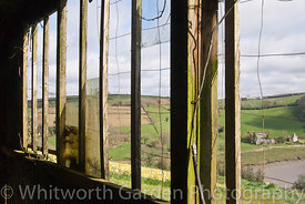 An old packing shed looking out onto daffodil fields. Tamar Valley, Cornwall. © Jo Whitworth