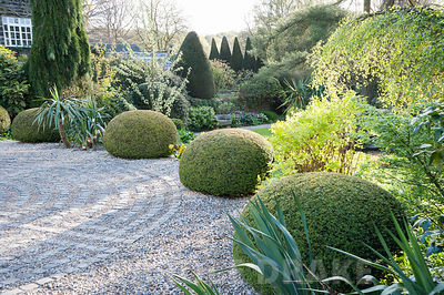 Clipped yew spheres frame the drive and the circular maze formed of stone setts laid in to the gravel. York Gate Garden, Adel...