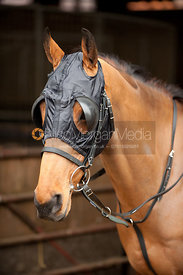 Racehorse wearing bridle and blinkers - royalty Free image