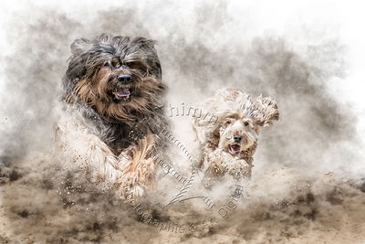Art-Digital-Alain-Thimmesch-Chien-654