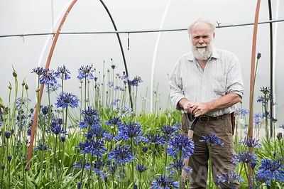 Dick Fulcher amongst his agapanthus. Pine C0ttage Plants, Eggesford, Devon, UK
