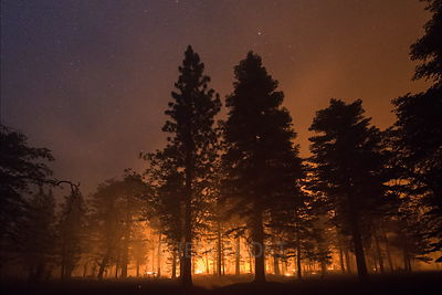 20150618_Lake_Smoke_Trees_Night_I_(close_encounters)-1001